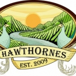 Sample The Best Beer In The City at the 5th Annual Hawthornes IPA Block Party