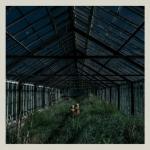 Foxing-Dealer-563x560